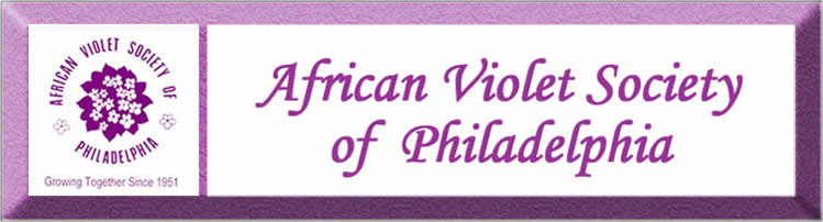 african violet society of philadelphia